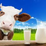 Cat de bun este laptele de vaca?