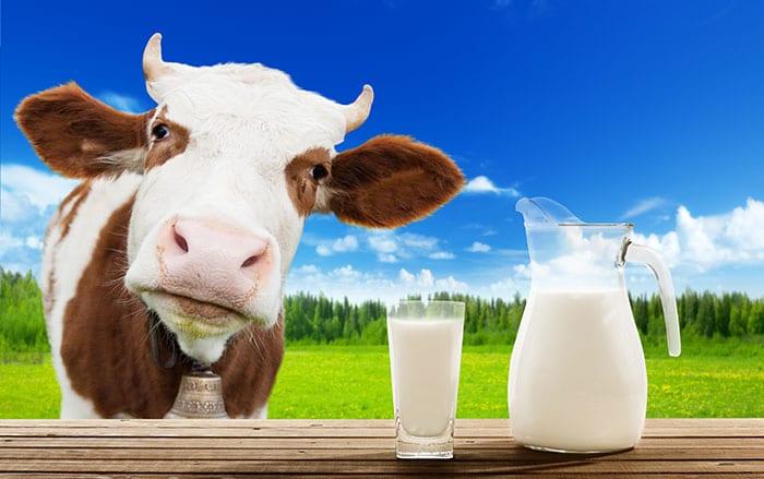 cat-de-bun-este-laptele-de-vaca